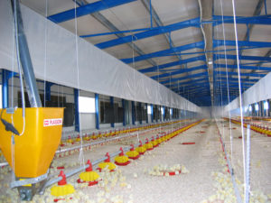 Conventional Poultry farm 1400m2 -Ioannina