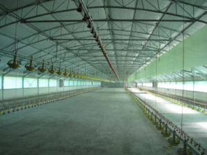 Tunnel Type Indoor Poultry